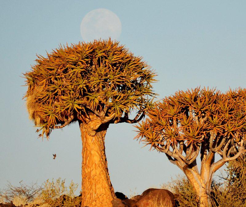 Namibija in Južna Afrika